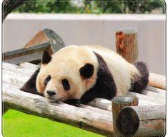 パンダ、動物園、関西
