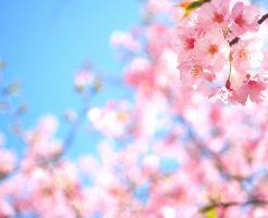 桜・お花見・防寒